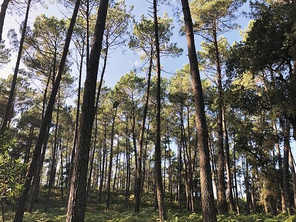 Forêt Scierie Bedora